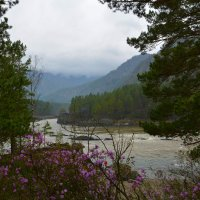 У устья реки Чемал. :: Валерий Медведев