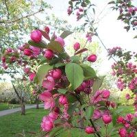 весна :: Зинаида