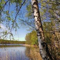 весна на озере :: Светлана