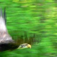 Полет орла :: vitper per