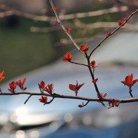 Весна в городе :: Екатерина Торганская