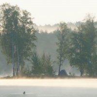 В тумане утреннем... :: Юрий Цыплятников