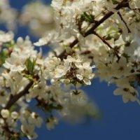 Цветущий нежный май :: Татьянка *