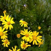 Весенние цветы :: Татьяна Королёва