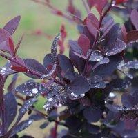 После дождя... :: Minowara Sam