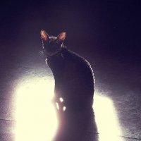 отражение света тень :: Лера