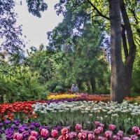 Весна в Аптекарском :: marmorozov Морозова