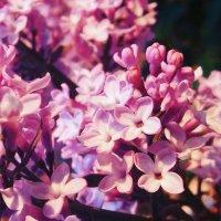 4 petals. :: Polina Akulenko