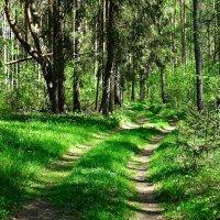 В Катынском лесу :: Милешкин Владимир Алексеевич