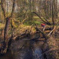У лесной речки :: Сергей Цветков