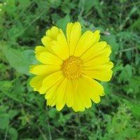 Солнышко в траве :: Дмитрий Никитин