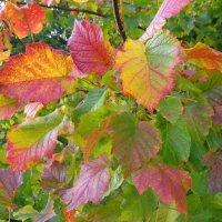 Осенние краски :: Андрей