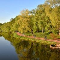 Нежная весенняя зелень :: Ирина Ярцева