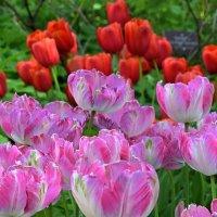 Цветут и радуют! :: Татьяна Помогалова