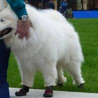 Как Вам мои ботиночки? :: Татьяна Лобанова