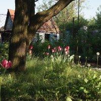 Майский вечер в саду :: София