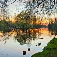 Гатчина,парк,закат :: Александр