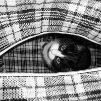 кот в мешке.. :: Elena Wise