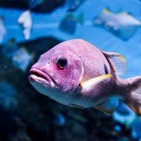 Рыбка :: Мария