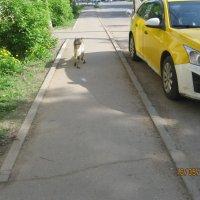 Собака на машине :: Smit Maikl