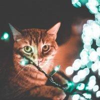 Кот и герлянда :: Юлия Морец