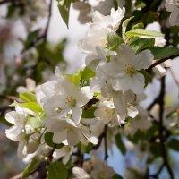 Весна в Ульяновск :: Евгений Анисимов