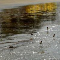 Птички. :: Чария Зоя