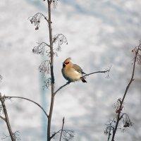 Птичка :: Роман Кудрин