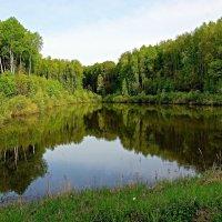 Лесное озеро :: san05   Александр Савицкий