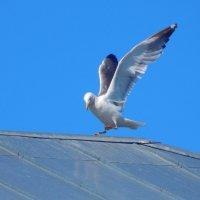 Танцы на крыше! :: Елена (Elena Fly) Хайдукова