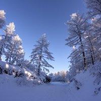 Зимняя  сказка :: Александр Паклин