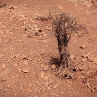 Марсианский пейзаж :: Борис