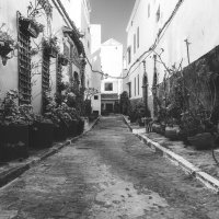 Много,много... цветов! Гуляя улочками Марокко! :: Александр Вивчарик