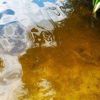 DSC_1550   Отражения на воде ..... :: Aleks Minin