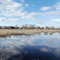 Разлив озера Рябовского :: Светлана Рябова-Шатунова