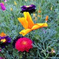 Летние цветы :: Алла ZALLA