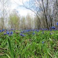 Весна :: Galaelina ***