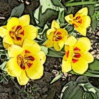 Цветы :: Алексей Виноградов