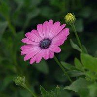 Цветок :: kvstu