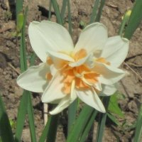 Красивый цветок :: Дмитрий Никитин
