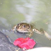 Царевна лягушка :: Максим Б