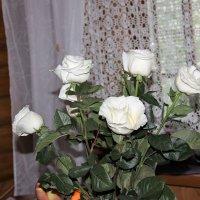 Просто цветы. :: венера чуйкова