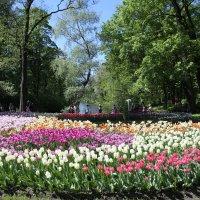 Фестиваль тюльпанов :: Валентина