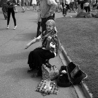 Скрипка...пела..... :: leonid