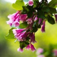 Весна :: Виктория Рябчунова