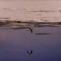 Весна на заливе... :: вадим измайлов