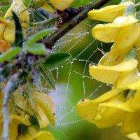 Хрустальные паутинки дождя :: Ольга Голубева