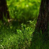 Травка зеленеет... :: Татьяна Губина