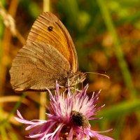 про бабочек - сенница 2 :: Александр Прокудин
