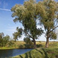 На берегу реки в солнечный полдень :: Владимир Шамота